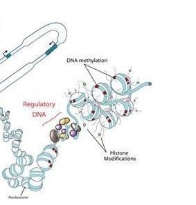 CANCER: Pouvoir le tracer jusqu'aux cellules d'origine – Nature