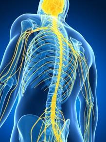 SCLÉROSE en plaques: Une thérapie prometteuse par cellules souches  – JAMA