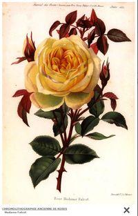 Expo-roses chromolithographie