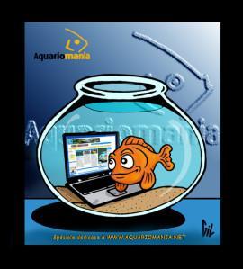 Bocal sec paperblog for Bocal poisson acheter