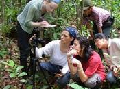Déclin puits carbone amazonien surmortalité arbres