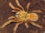 araignées plus venimeuses Chine