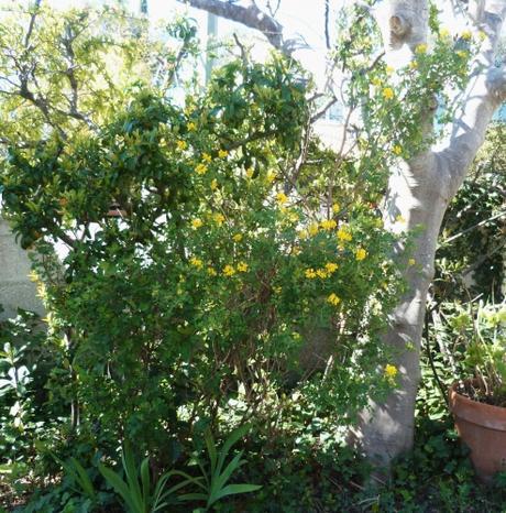 Au jardin fleurs et arbustes d couvrir for Fleurs thes au jardin