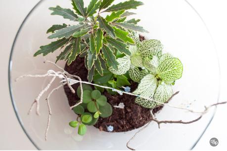 Mon petit jardin int rieur paperblog for Solde plante interieur