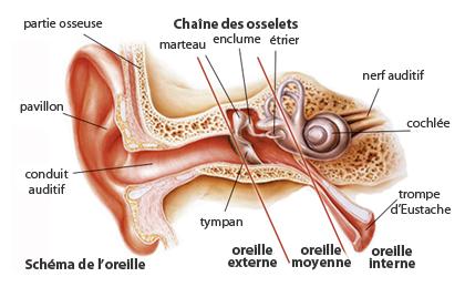 Casum sur les amygdales : comment s'en dbarrasser
