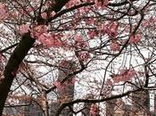 Pink city. 💕🌸👌🏼#NYC #NewYork #RooseveltIsland #explore...