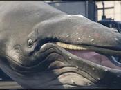 Incarner baleine dans Grand Theft Auto