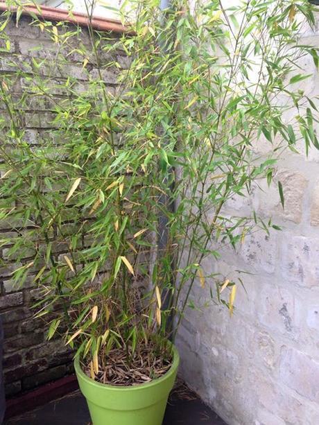 Amenagement jardin avec bambou fabulous vertigo jardins - Amenagement petit jardin bambou calais ...