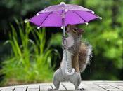 Trop mignon écureuil s'abrite sous parapluie