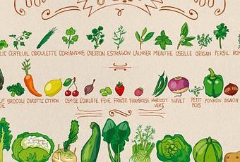 Calendrier des fruits et l gumes en juin paperblog - Fruit de saison juin ...