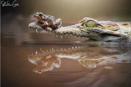 Le monde magique des grenouilles