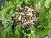 Salade haricots blancs