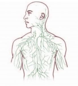 SYSTÈME IMMUNITAIRE: Et s'il était branché sur le cerveau? – Nature