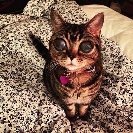 matilda-chat-yeux-dextraterrestre-01