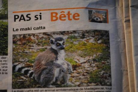 {projet journal} Du Tapir Terrestre au Maki Catta...