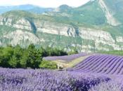 lavande Provence, parfum vacances
