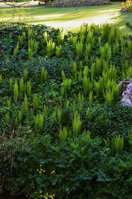 Escapade au jardin des plantes de nantes paperblog for Au jardin des plantes poem