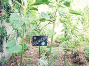 poetic garden montreuil