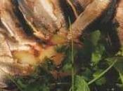Sardines marinées pommes Roseval, herbes curé piment d'Espelette