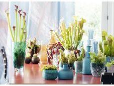 """plantes carnivores, plante mois bonheur"""""""