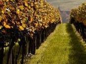 vignes malades d'un pesticide tout bien vous n'en saurez rien
