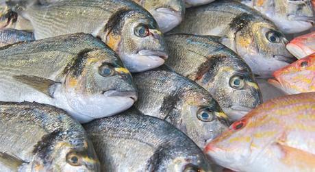 La nouveauté dans la pêche dhiver