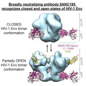 VIH: Un nouvel anticorps neutralisant qui suit le virus à la trace – Cell