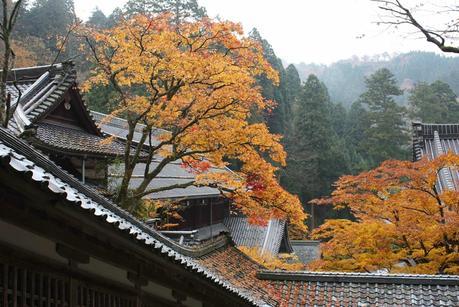 colorful leaves at Eiheiji