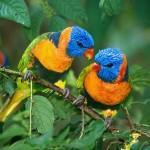 image de oiseau