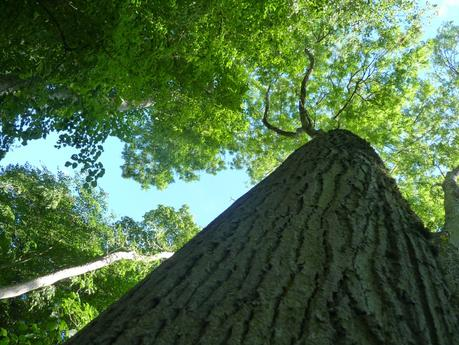 Un arbre presque sans branches