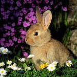 image de lapin