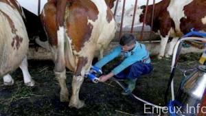 Algérie : La filière laitière à l'ordre du jour