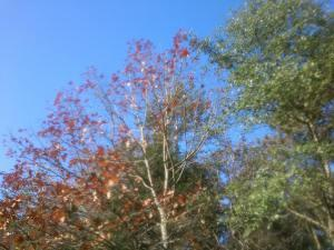 automne gayeulles