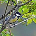 Aidez-vous les oiseaux à passer l'hiver dans votre jardin ?
