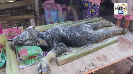 Thaïlande Buffle/dragon et loterie, le choc des karmas [HD]
