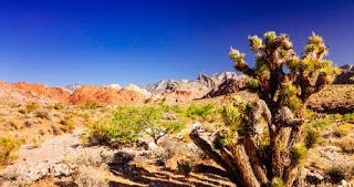 Henderson Trail Classic: une opportunité unique de découvrir le Trail US!