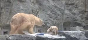 L'instinct au fond de la piscine
