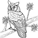 dessin de hiboux