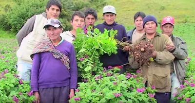 Promouvoir et renforcer les méthodes locales de production au Pérou