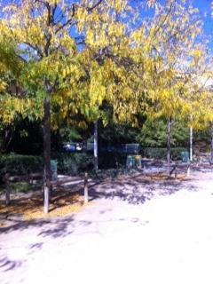 parc automnal