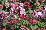 fleurs le cours à Epinal 006