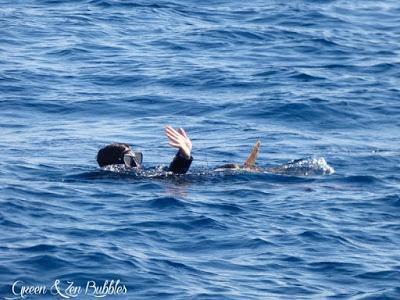 Panisse, la tortue marine, est retournée chez elle !