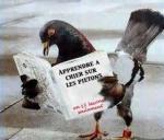 Elles nous prennent pour pigeons!