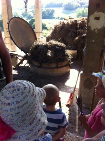 Distillation lavande