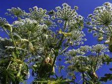 plantes très dangereuses présentent France.