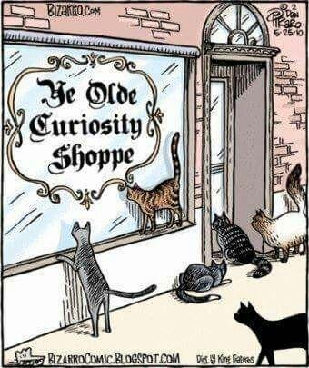 Trop curieuse !