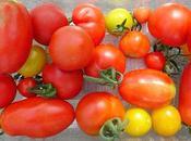 Salade d'haricots blancs avec fenouil tomates rôtis roquette