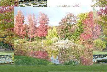 Le jardin remarquable du bois marquis d couvrir - Jardin bois marquis vernioz colombes ...