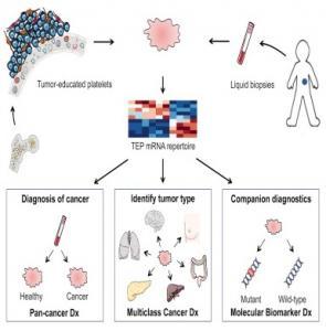 cancer une seule goutte de sang pour identifier l 39 origine de la tumeur cancer cell lire. Black Bedroom Furniture Sets. Home Design Ideas