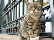 [lol cat?] chats l'Ermitage font conservation préventive